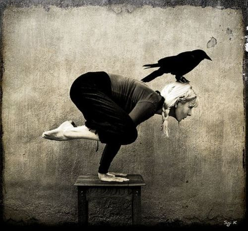 crow & crow.Crows Poses, Vintage Photos, The Crows, Spirit Guide, Yoga Poses, Weights Loss Tips, Birds, Inspiration Quotes, Ravens