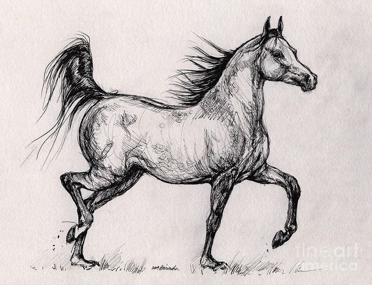 17 Best images about Drawing Horses on Pinterest | Arabian ... - photo#15