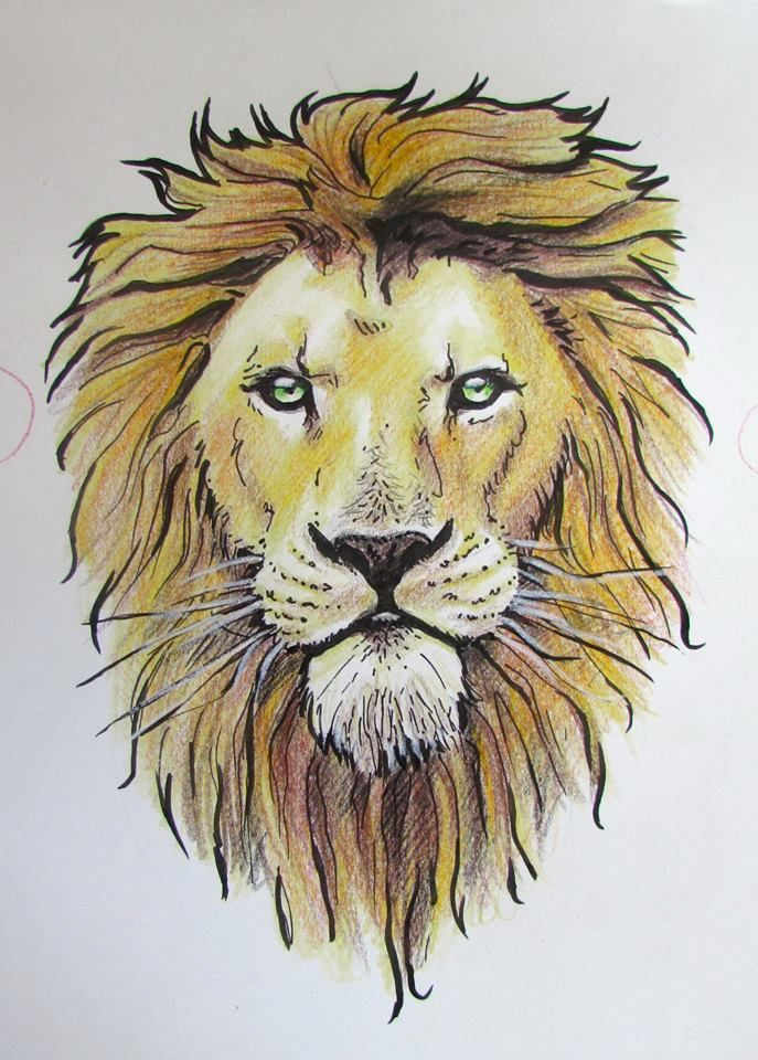 Lion Colored Pencil Ink 8x10 Http Ift Tt 2d3s90k Lion Drawing Abstract Lion Art Lion Sketch