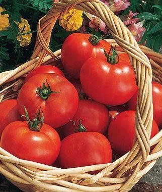 Bush Early Girl Hybrid Tomato Seeds and Plants, Vegetable ...