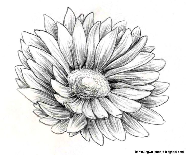 Best 25 flower drawing in pencil ideas on pinterest for How to draw a cute flower