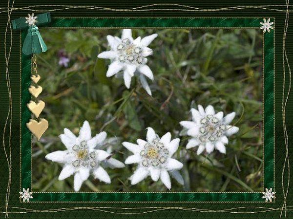 fichier edelweiss edelweiss pinterest fichiers. Black Bedroom Furniture Sets. Home Design Ideas
