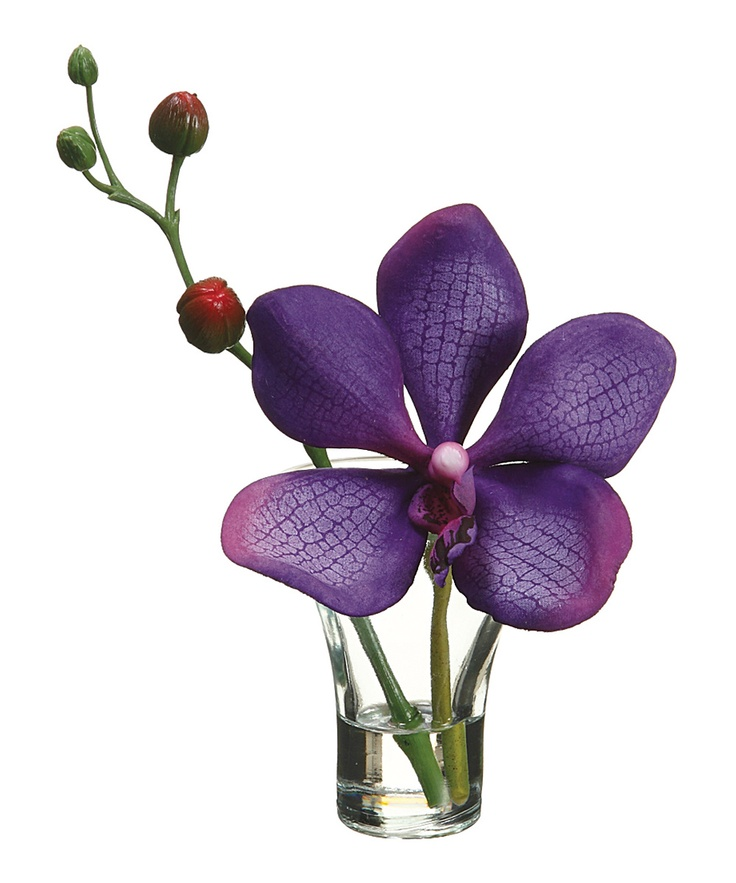 Purple vanda orchid plant glass vase vase and vanda orchids for Allstate floral and craft