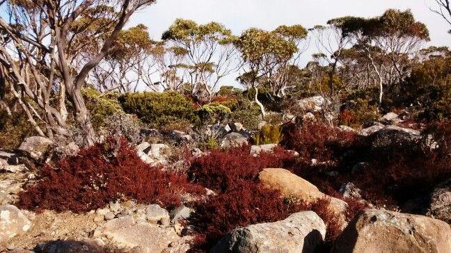 Kunanyi, tasmania