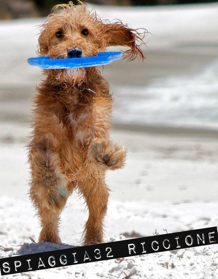 Spiaggia Secondo 32 – Riccione (Rimini) Via Torino 32 Cell. 338.3663686 Ammessi cani di taglia piccola e media Servizi: Ciotole, Area riservata Nel nostro stabilimento potrete stare in completo relax con il vostro cane. Vi sono aree di 16 mq dove all´interno di essa ogni cane stà con la propria famiglia in completa libertà,senza guinzaglio o museruola. All´interno vi è ombrellone,lettini,ciotole per i cani e fontanelle dell´acqua. Ogni cane ha il suo spazio.