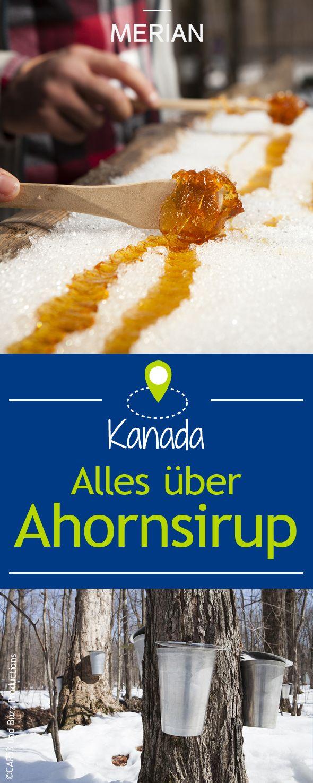 Maple Syrup - der kanadische Ahornsirup erinnert an flüssiges Gold und schmeckt himmlisch süß. MERIAN klärt Sie über den süßen Saft des Ahorns auf.