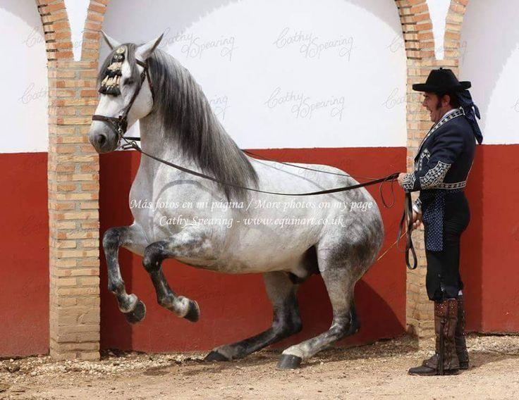 barokk lovak lovas magazin jesus morales doma vaquera