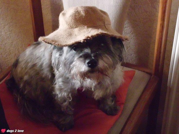 Peggy-Sue, Cairn-Terrier / Malteser Mix