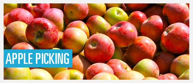 Apple picking in LA:  http://site.where.com/apple-picking/top-4-apple-picking-locations-in-la/    http://losangeles.cbslocal.com/top-lists/best-apple-picking-near-los-angeles/