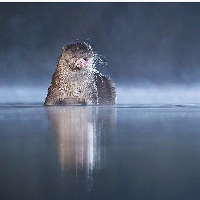 Mighty otty hunter!  Let us know whats your favourite animal!   Follow @ecoconltd for more inspiring posts!  -  Want to be featured? Use the hashtag #ecoconftme :)  @john.gooday