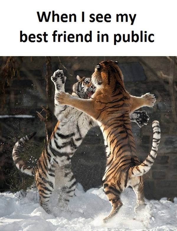 07c805bbe9b1a95cc9aed6c309732774 funny best friend memes friendship memes best 25 funny best friend memes ideas on pinterest best friend,Husband Best Friend Meme