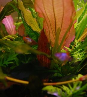 Маленький аквариум-