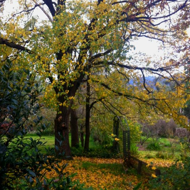 Montsalvat Gardens
