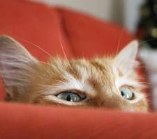 funny kočičí oči