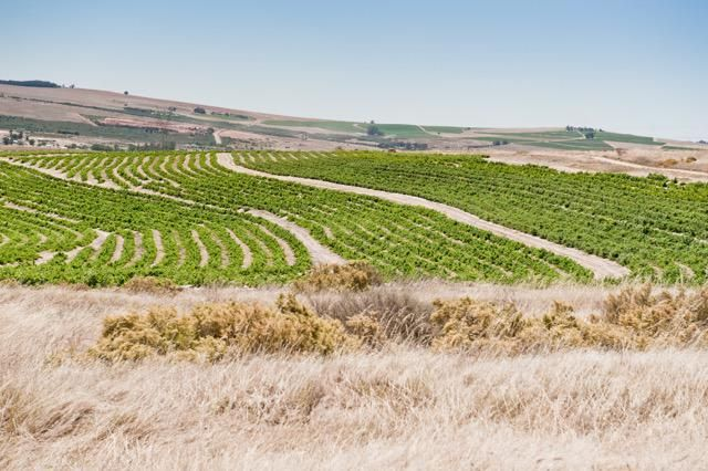 Klein Amoskuil comprises a patchwork of different soils, only 25% of the 400 hectares of land is planted under vine. #Amoskuil #Swartland #SpiceRouteWines