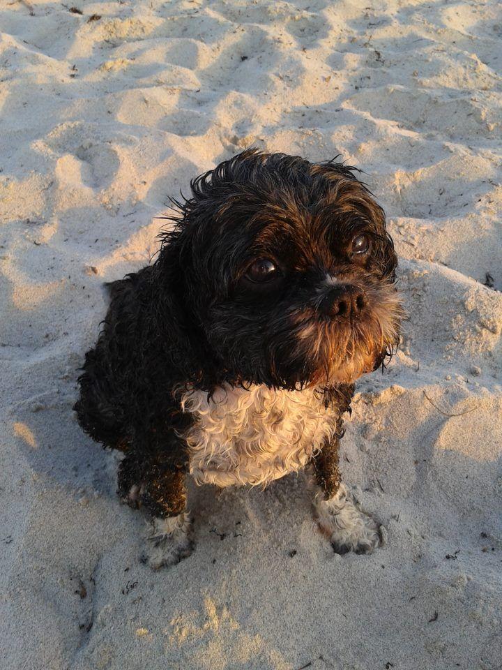 Sebastian at the beach.