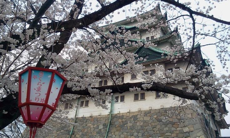 名古屋城と桜祭り