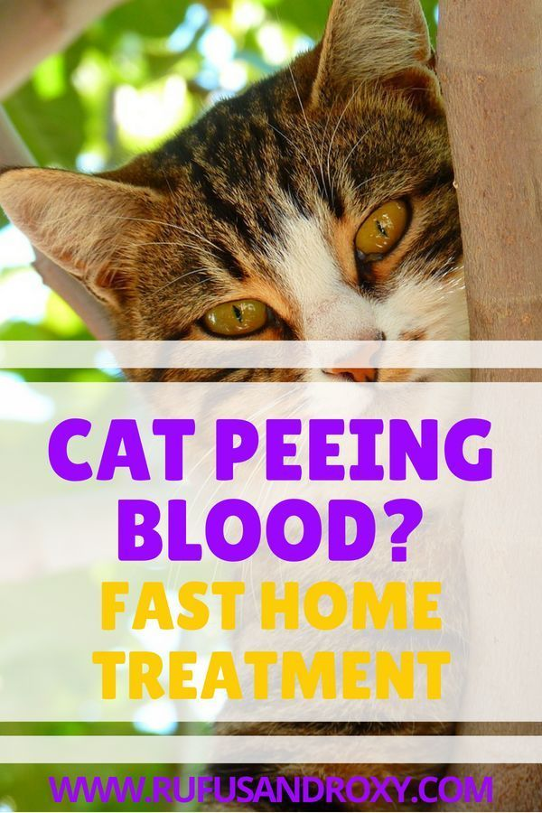 Pin On Cat Health Tips