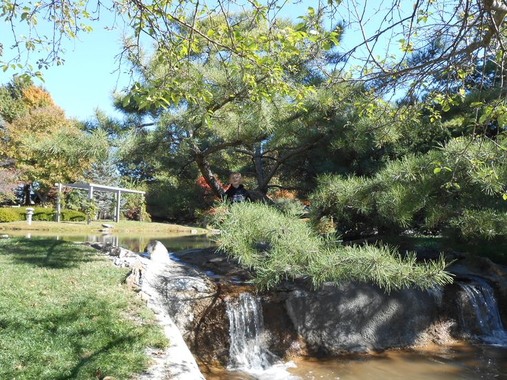 1000 images about mizumoto japanese stroll garden springfield mo on pinterest Mizumoto japanese stroll garden