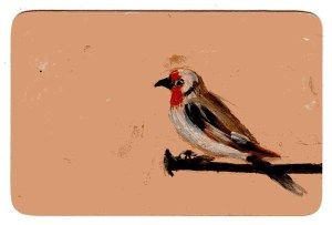 sara wicks: beaneybirdcropped