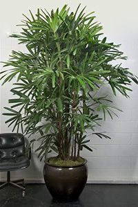 Houstonu0027s Online Indoor Plant U0026 Pot Store   Best Indoor Plants For Medium  Light Conditions