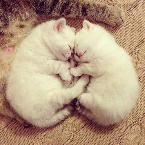 Sweet kitties!