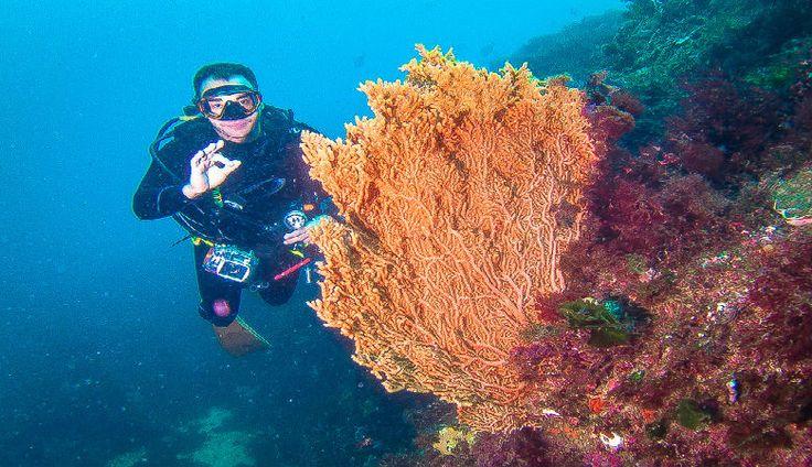 Kumano - Top Diving - Mergulho No Japão - Coral Diving