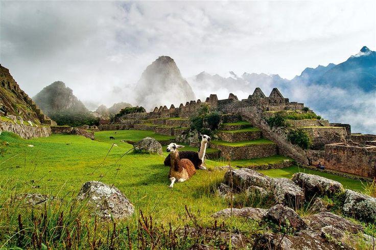 Machu Picchu  Llamas y vicuñas pastan entre las ruinas situadas a lo largo del Camino del Inca.
