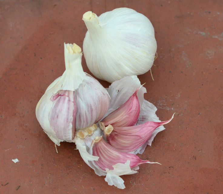 How to plant garlic in Autumn; a guide to growing this easy crop for use in your cooking next Summer.
