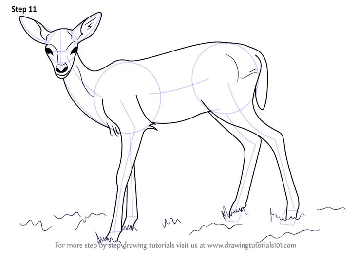 The 25 best How to draw deer ideas on Pinterest