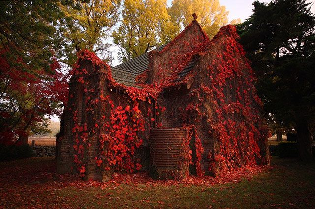 """Like a scene in the 2005 movie, """"War of the Worlds"""", blood red vines cover this abandoned church in autumn. Photo by *CainPascoe From Francesco Mugnai's blog, """"33 more breathtaking and incredible photos of abandoned places."""""""
