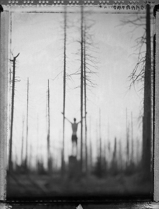 I love the length and depth this image has. The tall trees words really well and adds to the length of the figure standing. The appear to be on top of the world. The fog adds a nice touch to the already rustic feel.
