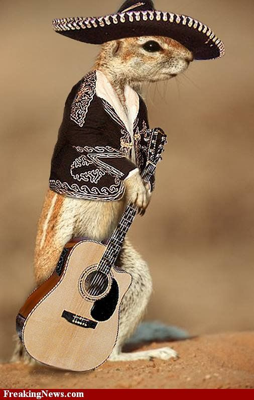 This little chipmunk is so funny dressed up as a Mariachi. Don't you wish to have one like this to celebrate Halloween with you! Hola!