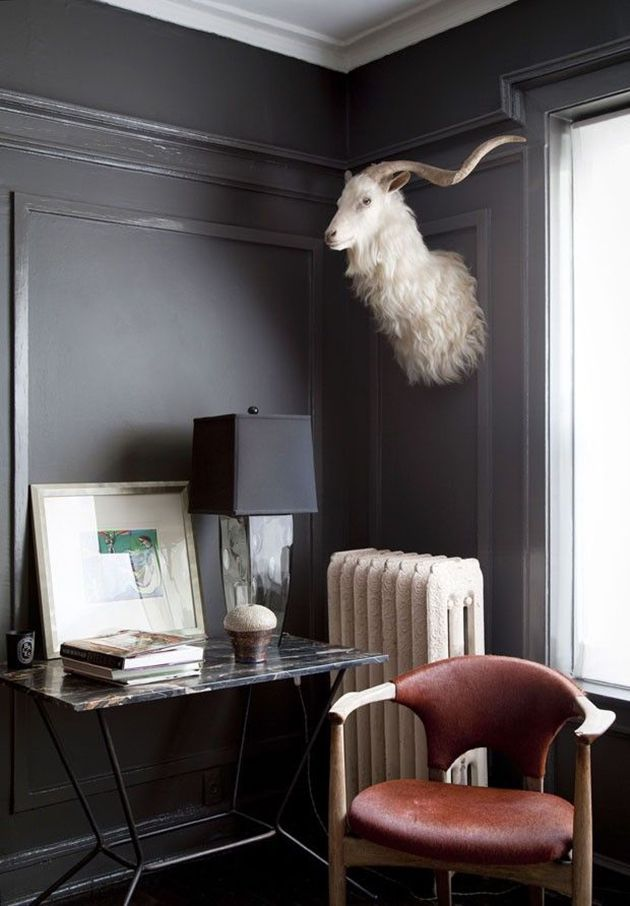 The New Trend in Taxidermy