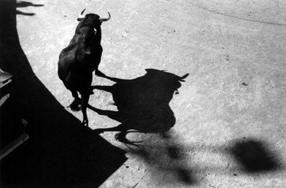 Le taureau des ombres, Nîmes, 2009