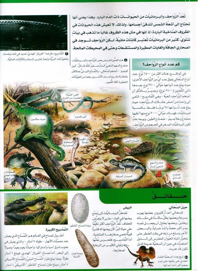 موسوعة سؤال وجواب عالم الطبيعة Learning Arabic Learning