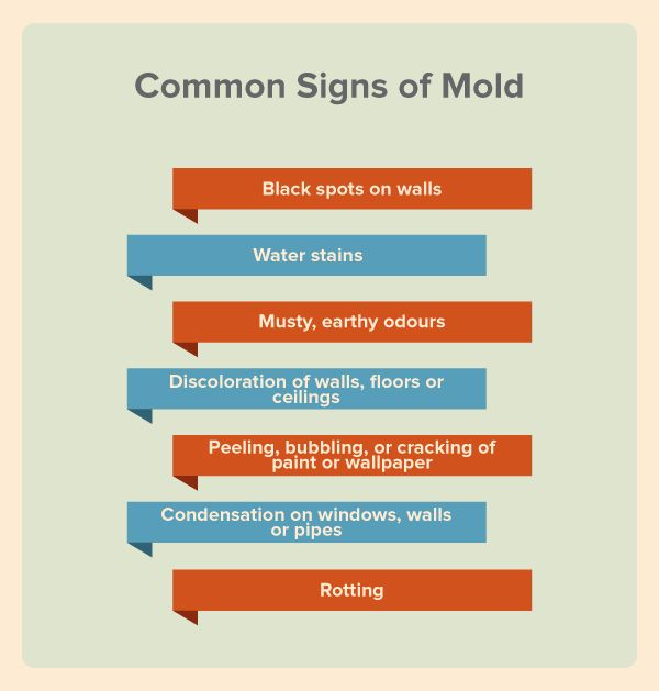 You can't always see a mold problem, but often there are signs. #mold #signs