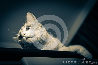 Download Night Cat Portrait Stock Image for free or as low as 0.68 lei. New users enjoy 60% OFF. 22,451,612 high-resolution stock photos and vector illustrations. Image: 39180501