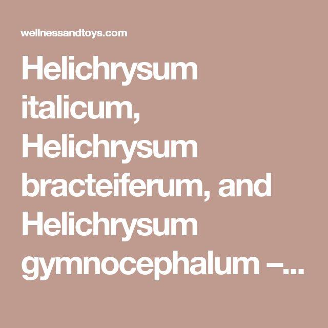 Helichrysum italicum, Helichrysum bracteiferum, and Helichrysum gymnocephalum – Indigo Mountain