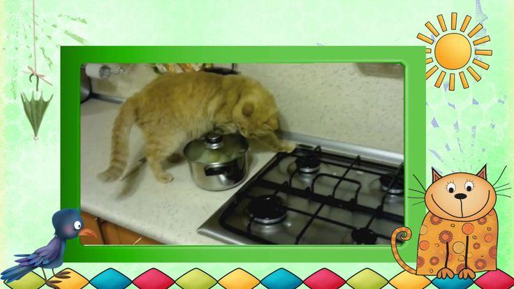 Видеоклип Коты-разбойники. Часть 14. или Видео -клип Коты -забияки