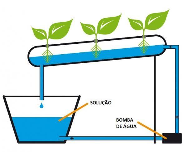 Como fazer hidroponia em casa. A hidroponia é uma técnica de cultivo de plantas em que se substitui o solo por uma alternativa inorgânica, que tanto pode ser lã de rocha, uma solução líquida que contém água e todos os nutrientes es...