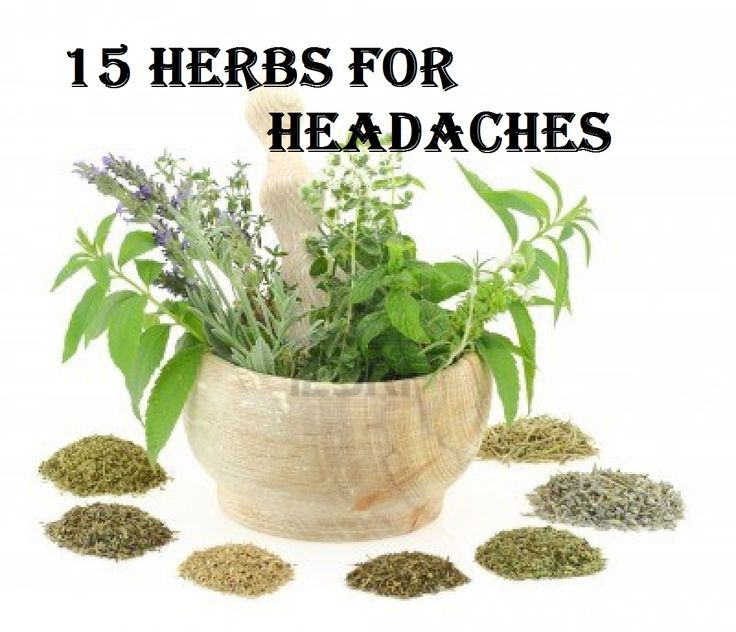 15 Herbs for Headaches - The Homestead Garden
