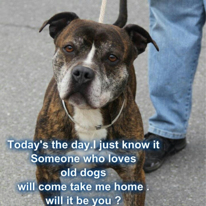 "Luigi was dumped at Yonkers Animal Shelter by his ""family""  of 9 1/2 years... He was too old.   Please repin to find him a home."