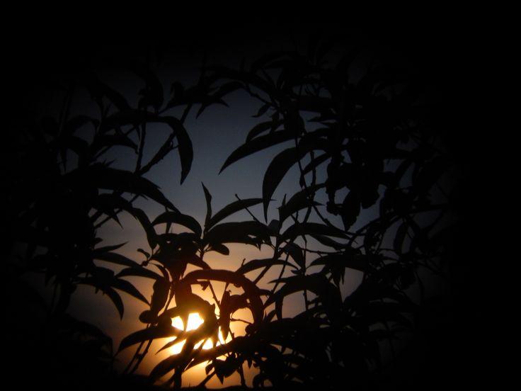 luna, noche ..