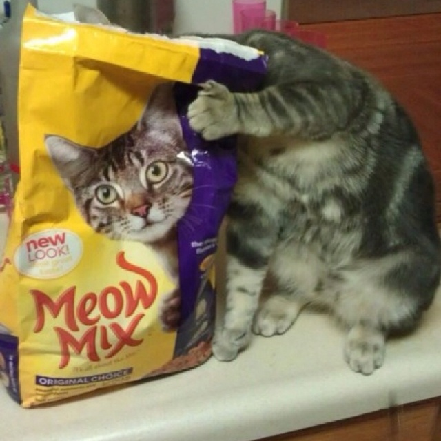 Meow, meow, meow, meow....: Funny Kitty, Perfect Time Photos, Funny Cat, Cat Food, Cat Meow, Funny Commercial, Catfood, Silly Cat, Cat Photos