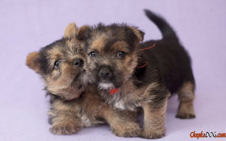 Photos of funny mini dogs