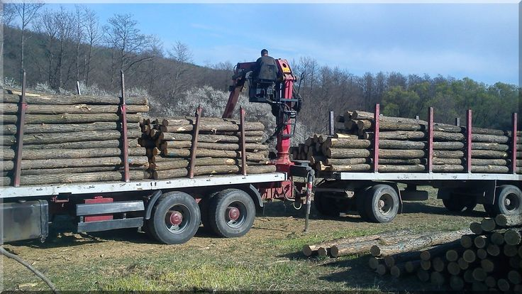 Hopfenmasten aus Robinienholz