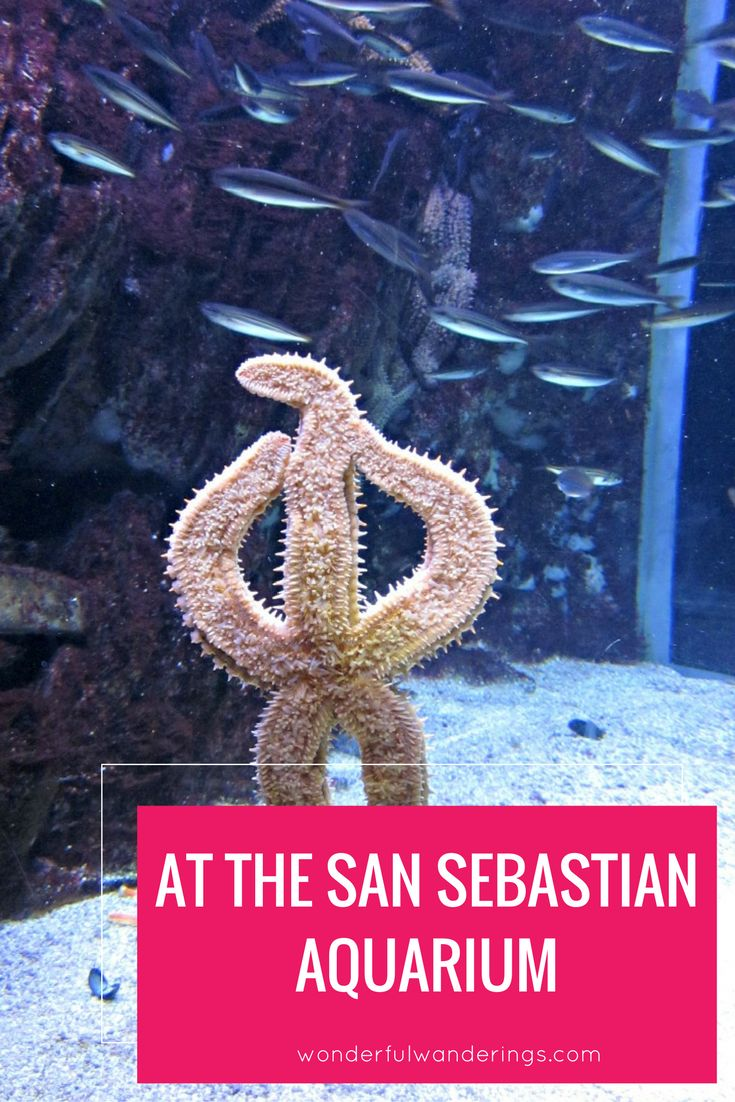 Restaurante Aquarium San Sebastian. Excellent Image Of Aquarium With ...