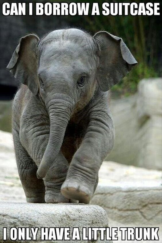 13 Hilarious Elephant Memes | elephants | Animals, Cute ...