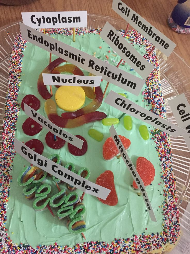 5th grade animal cell diagram car alarm installation wiring diagrams best 25+ edible ideas on pinterest | cell, model project and ...